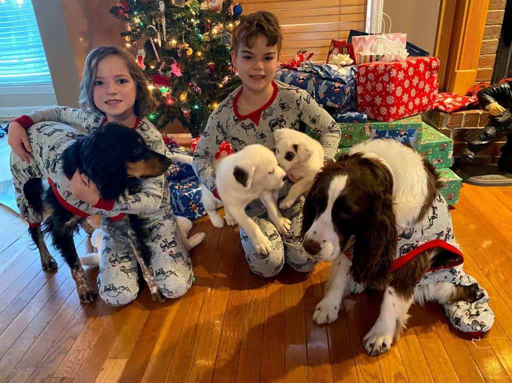 Picture of kids with four dogs in front of a Christmas tree
